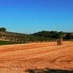 Frassinello Monferrato landscape