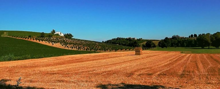 Frassinello Monferrato landscape