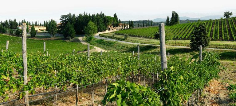 Moscato d'Asti vineyards | Ruffino Italian Wines