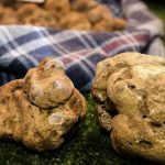 Canelli truffle hunting tours by locals