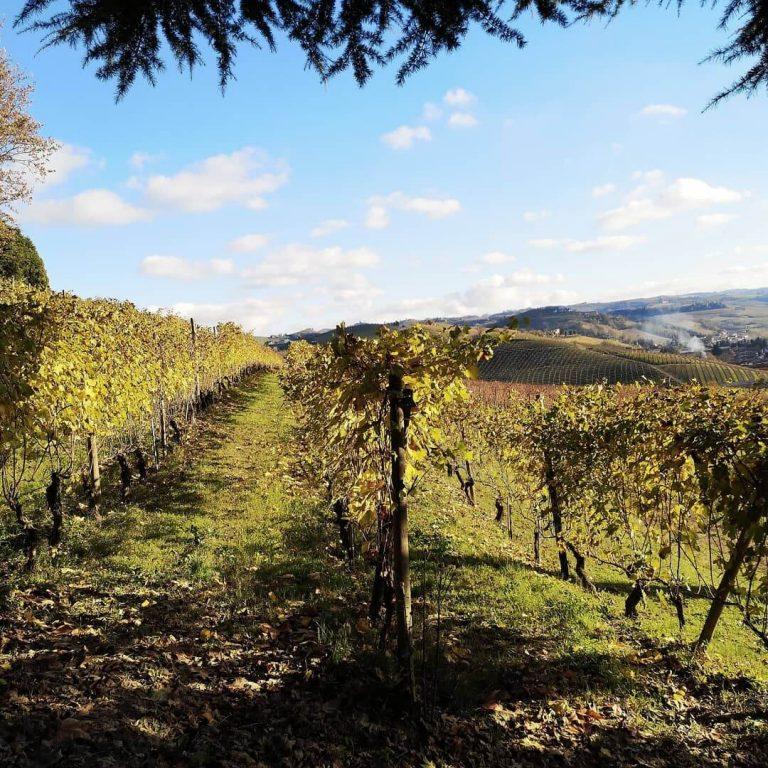 Grinzane Cavour Castle & beautifull landscape