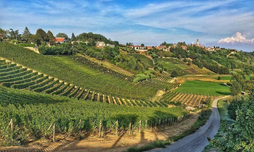 vinchio vineyard landscape