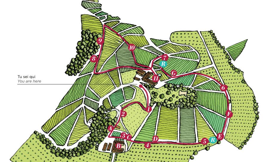 Langhe Vineyard Trekking Tour