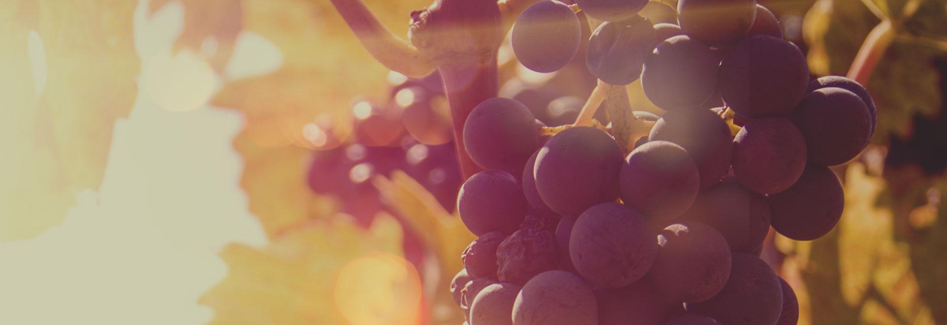 Bottega del Vino Serralunga D'Alba