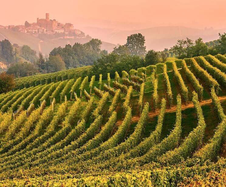Castiglione Falletto, Langhe, vineyard landscape