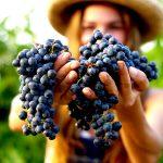 Barbera wine tour