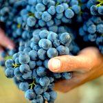 Barolo and Barbaresco Wine Tour Experience