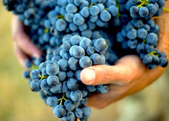 Wine tour Barolo & Barbaresco Wine Tour Experience