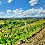Neive wine tour