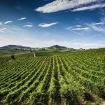 Monforte Wine Tour
