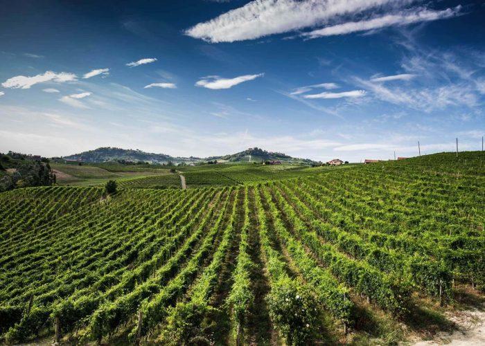 Monforte Wine Tour