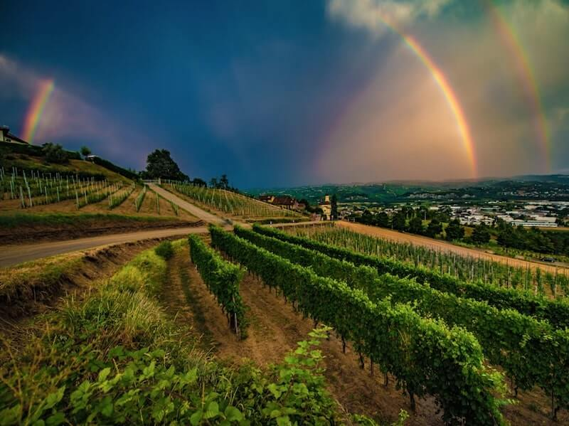 Vineyard with Rainbow