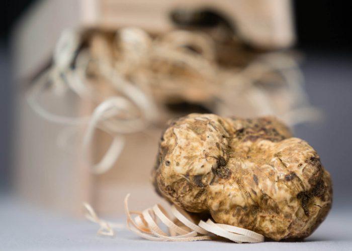 Barolo truffle hunting ftour rom Milan