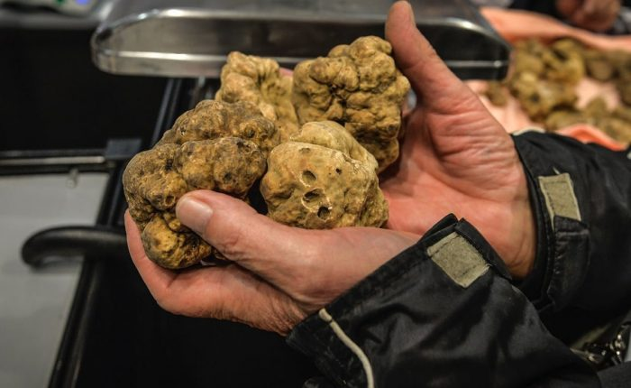 la morra truffle hunting