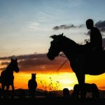 langhe horseback riding
