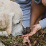 truffle hunting la morra
