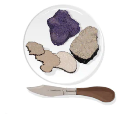truffle vector