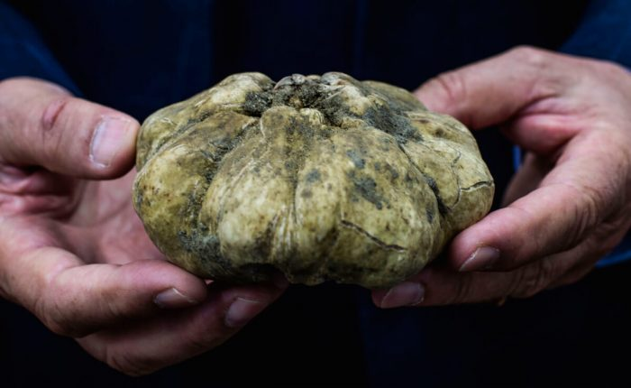 Turin Truffle Hunting Experience