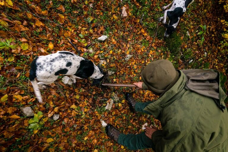 what to know for truffle hunting