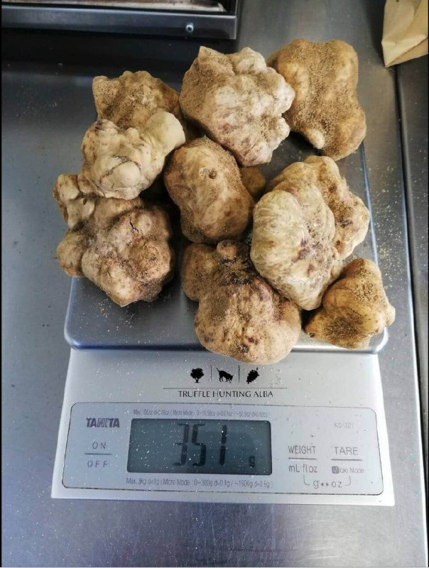 white truffle trade