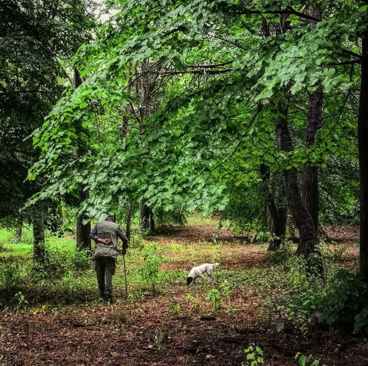 barolo truffle hunting experience